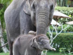 Elephant Safari Park Lodge Hotel Bali - Recreational Activity