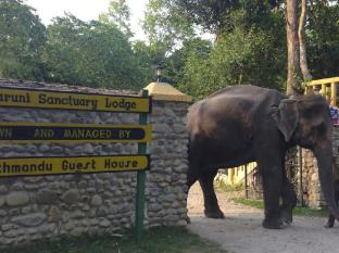 Maruni Sanctuary Lodge Chitwan National Park - Lodge Entrance