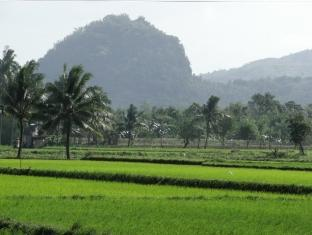 Isle of View Beach Resort And Guesthouse Loon - Rice Fields
