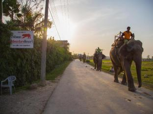 Chitwan Adventure Resort Chitwan National Park - Elephants passing by the entry gate