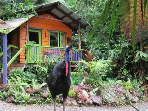 Hotel in ➦ Cape Tribulation ➦ accepts PayPal