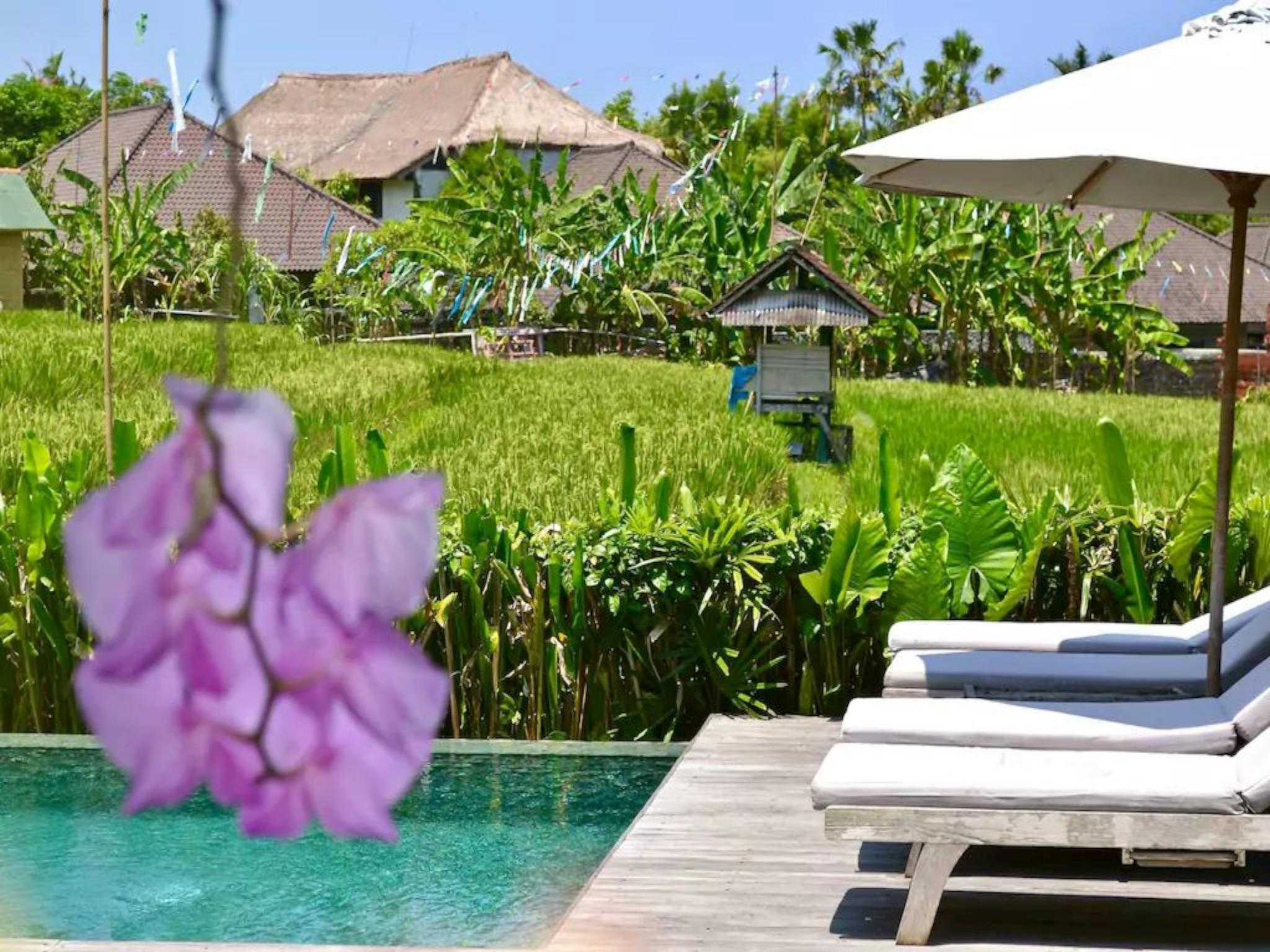 Artis Suite Tengah Rice field View Umalas - Canggu