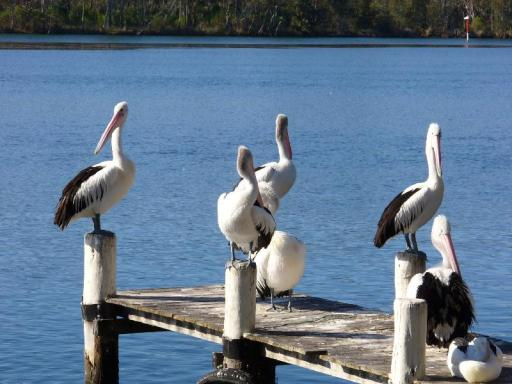 Best guest rating in Jervis Bay ➦ Jervis Bay Motel takes PayPal