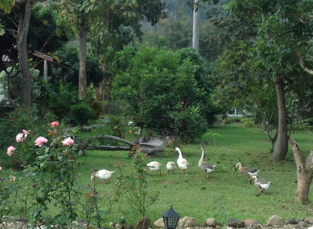 At Home Chiang Dao Resort