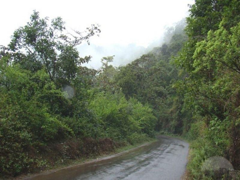 Discount Forestvalley Holidays Coorg