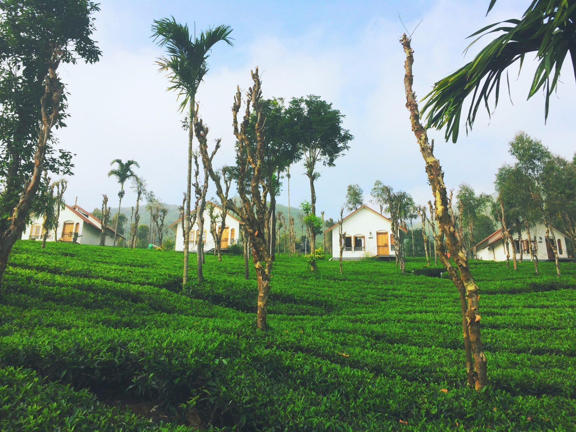 Tea Terrace Vythiri Resort