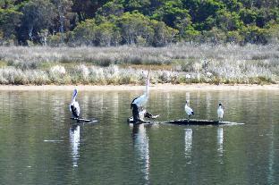 Two queen cottage in lovely bush park by the river Kalgan Western Australia Australia