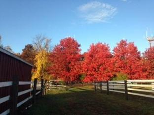 Flint Hill Farm AG Coopersburg (PA)  United States