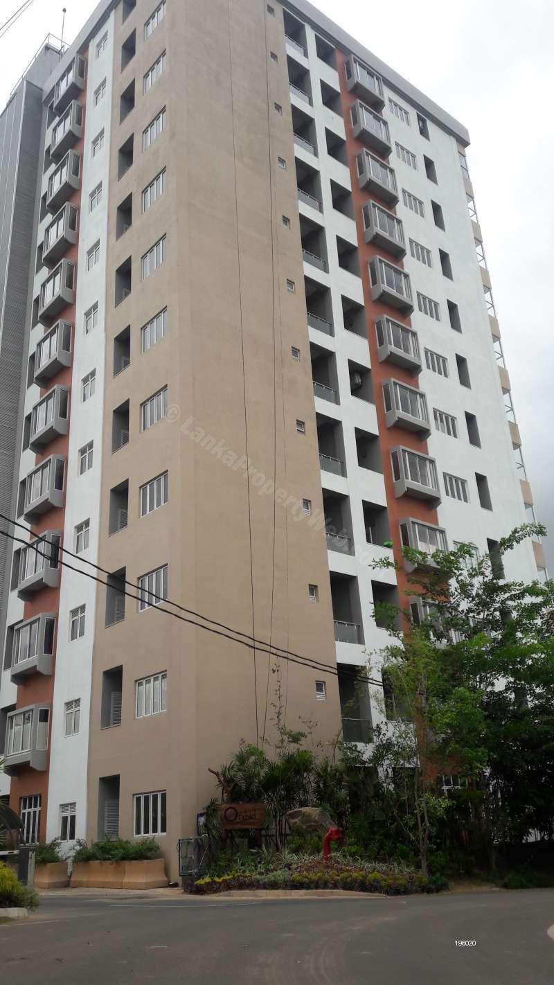 Luxury 2 Bed Room Condominium Apartement