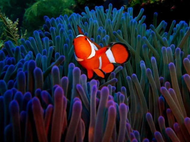 Arya Amed Beach Resort & Dive Center