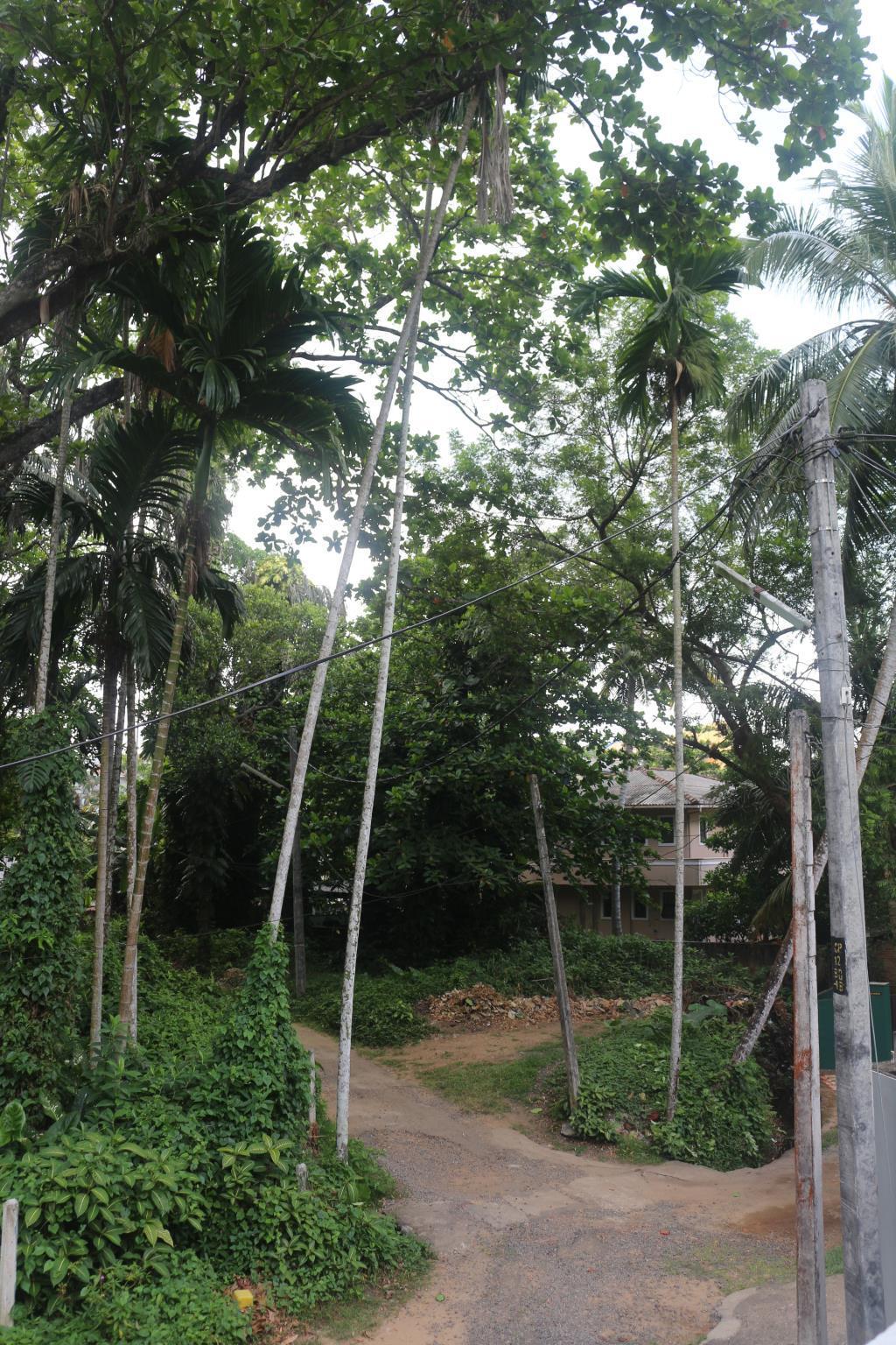 Jungle Guest House