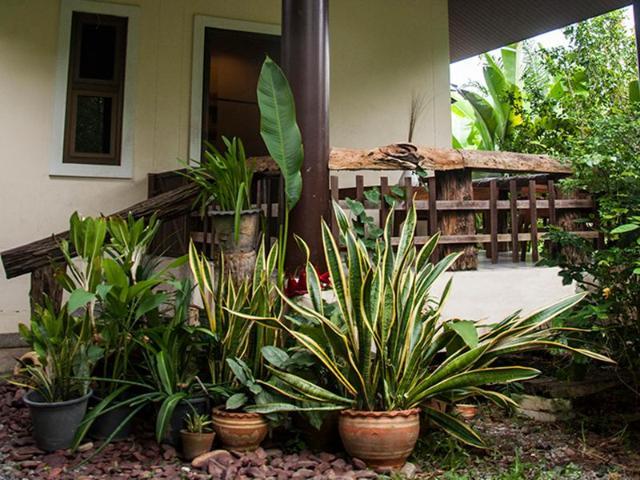 ปาล์ม คอตเทจ – Palm Cottage