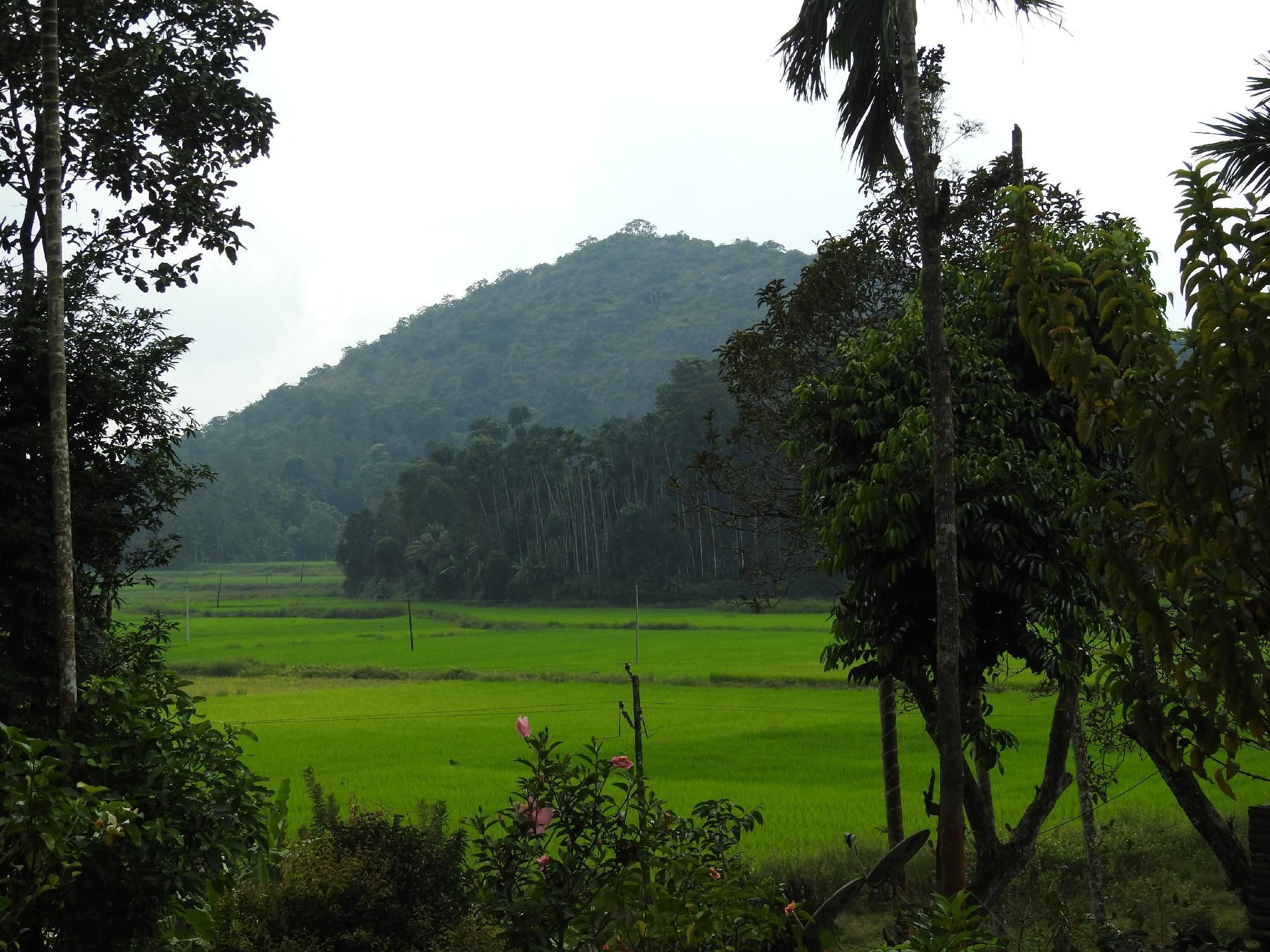 The Bliss Coorg