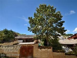 Sol Tree Inn Shangri-La