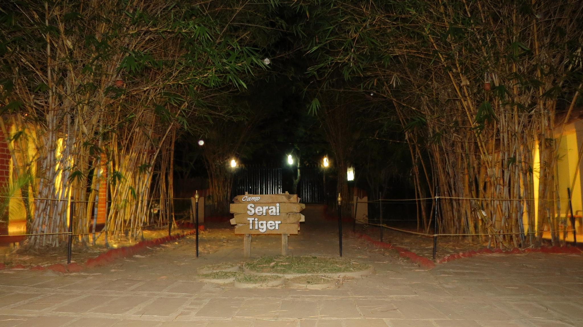 Camp Serai Tiger