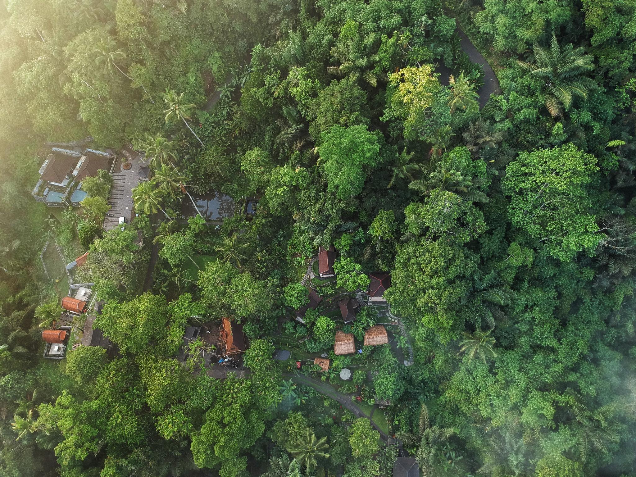Bali Jungle Huts Reviews