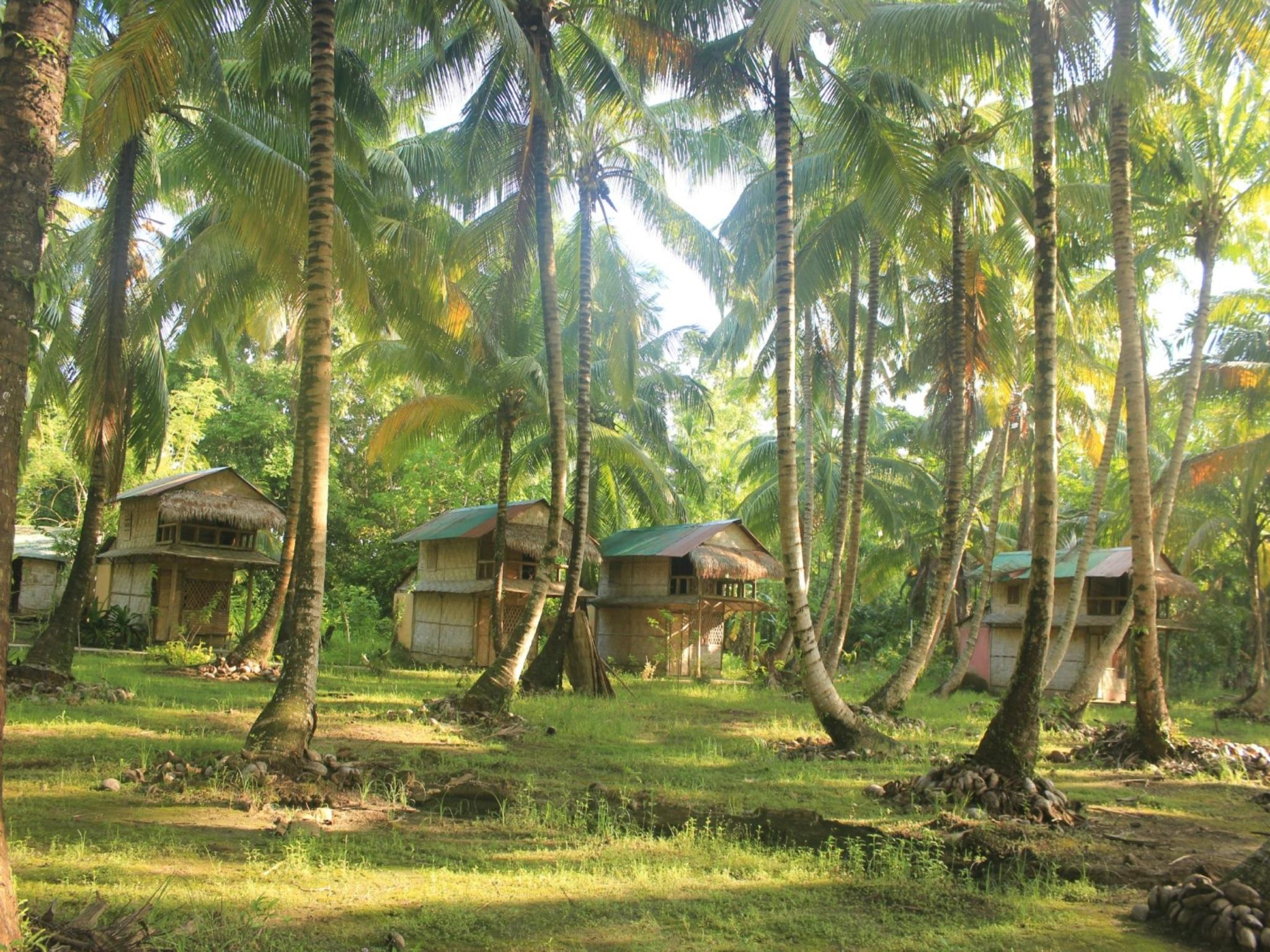 Pristine Beach Resort   Diglipur