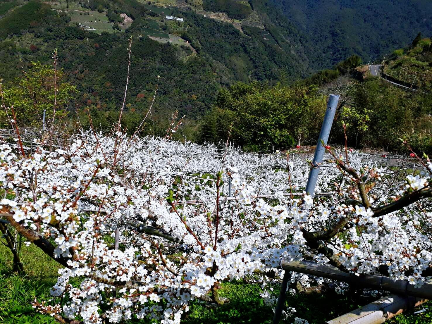 Lala Mountain Gaoyuan Farm