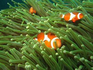 picture 4 of Bentrina Diving Resort