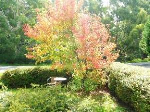 Acacia Spa Garden Suite Daylesford