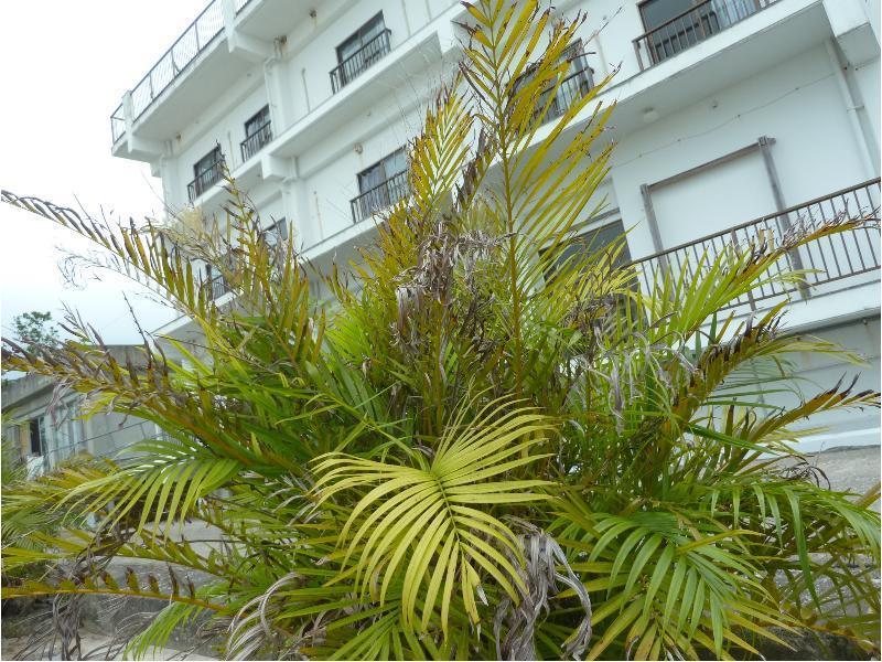 Seaside Hotel Royal Blue Moon