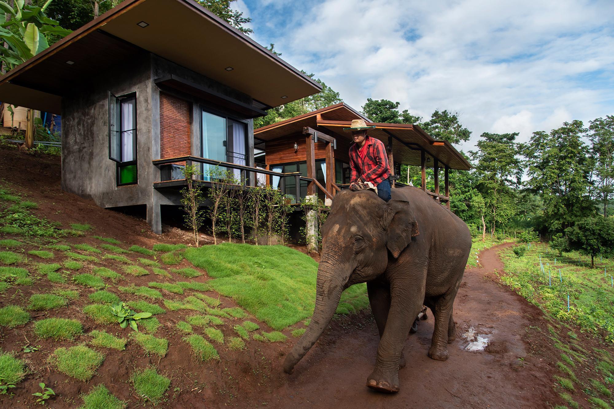 Chiang Mai Elephant Friends เชียงใหม่ เอลเลแฟนต์ เฟรนด์