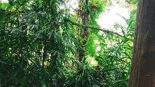 [トンパプム]バンガロー(5m2)| 1ベッドルーム/0バスルーム Suriya Bamboo Bungalow