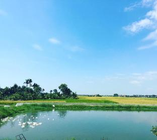 Lotus House with beautiful rice field view