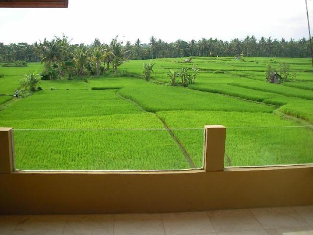 Rice paddy fields villa near Ubud