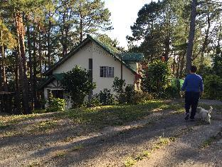 picture 1 of Family Cottage Under Pine Trees, Mountain Views